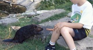 Beaver Water World