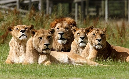 Blair Drummond Safari & Adventure Park