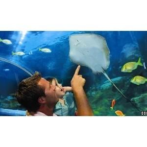 Blue Reef Aquarium in Hastings