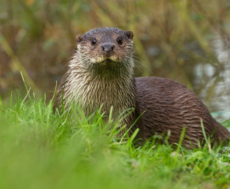 British Wildlife Centre