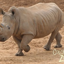 Colchester Zoo - © Anne Rackham