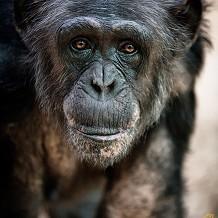 Colchester Zoo - © Scott Davey