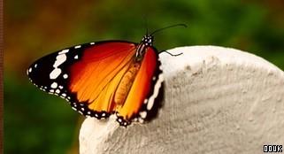 Earnley Butterflies, Birds and Beasts