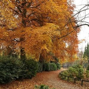 Fletcher Moss Botanical Garden