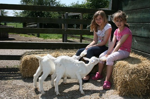 Longdown Activity Farm