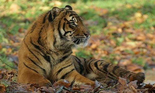 Paignton Zoo - © Ray Wiltshire