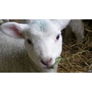 Rare Breeds Country Farm Park