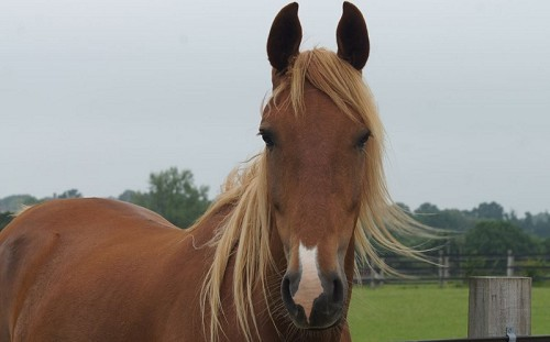 Redwings Horse Sanctuary Ada Cole