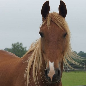 Redwings Horse Sanctuary Ada Cole