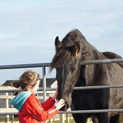 Redwings Horse Sanctuary Aylsham