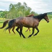 Redwings Horse Sanctuary Mountains