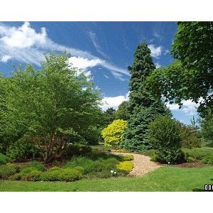 RHS Gardens Wisley