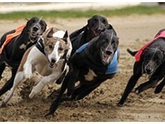 Romford Dogs