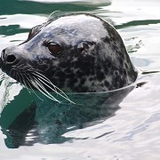 Scottish SEA LIFE Sanctuary - © Jennie Rainsford