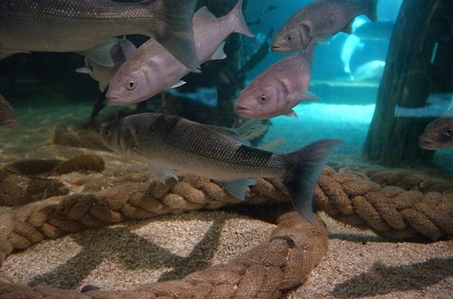SEA LIFE Centre - Great Yarmouth - © Kevin Millican