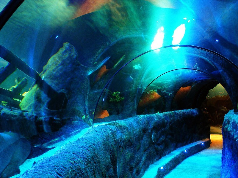 Sea Life Centres for Pinterest