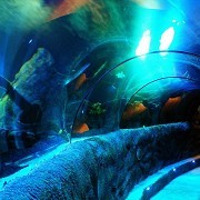 SEA LIFE Centre - Loch Lomond - © Tim Kirman