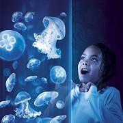 Sea Life Centre - Scarborough