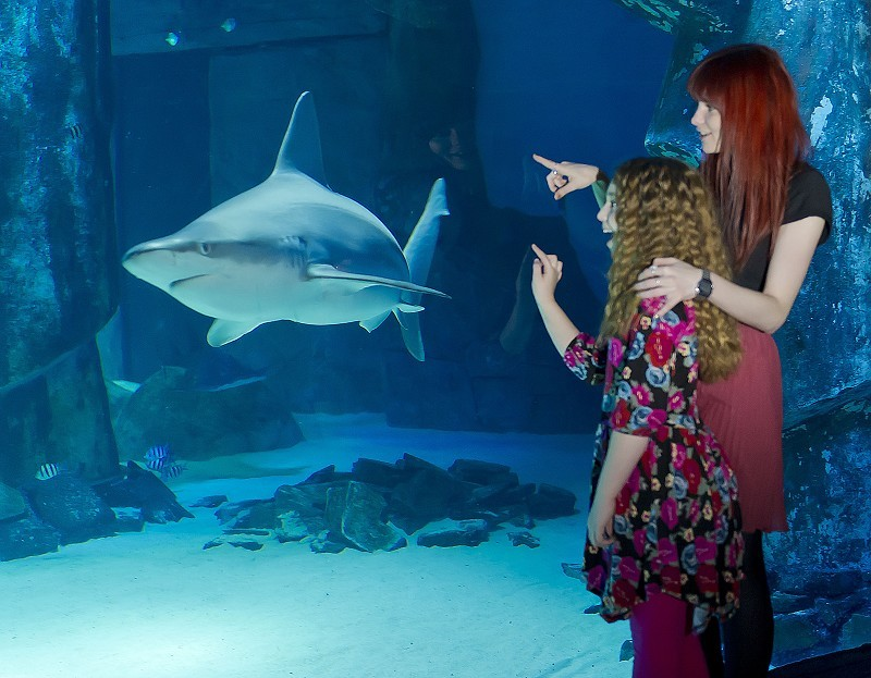 Sea Life London Aquarium Westminster London