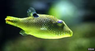 SeaQuarium Weston-Super-Mare