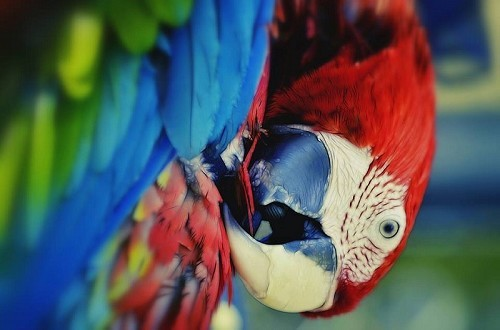 Squawk on the Wild Side