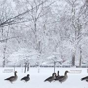 St James's Park - © The Royal Parks
