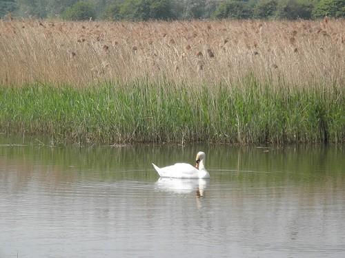 Stodmarsh Nature Reserve - Visit Canterbury