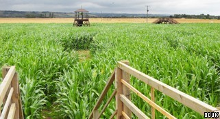 The Marsh Maize Maze
