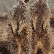 Twycross Zoo - © Twycross Zoo