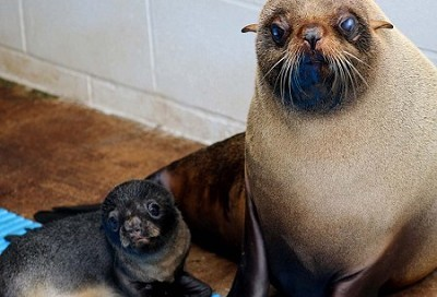Surprise, surprise! Seal gives birth during day at coastal zoo!