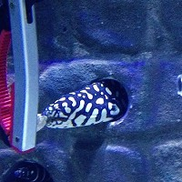 SKELETOR EEL ADDS EXTRA BITE TO AQUARIUM'S HALLOWEEN EVENT