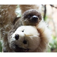 ZSL London Zookeeper Steps in to Hand-Rear Baby Two-Toed Sloth