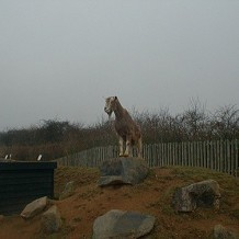 Colchester Zoo - king of the castle by fuzzyfish