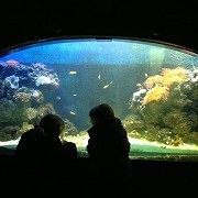 At Southend Sea Life Centre by fuzzyfish