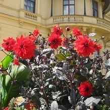 Osborne House - The Terrace Garden by OsborneBeach
