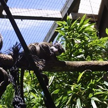 Colchester Zoo - Another one of the Emperor Tamarins by Stuart