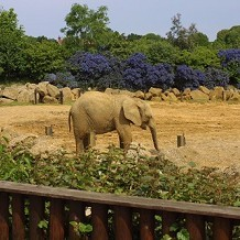 Colchester Zoo - Elephant at Colchester Zoo by Stuart
