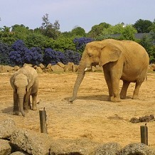 Colchester Zoo - Big and little elephant by Stuart
