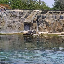 Colchester Zoo - Sea Lions in the enclousure by Stuart