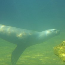 Colchester Zoo - An attempt to take a picture of the Sea Lions from the underwater tunnel by Stuart