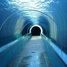 Colchester Zoo - Sea Lion tunnel at Colchester Zoo by Stuart