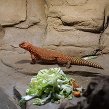 Colchester Zoo - A lizard chap! by Stuart